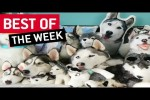 Video - die besten Videos der 2. Juni-Woche
