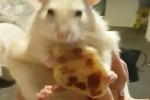 Video - Lustige Missgeschicke mit Pfannkuchen