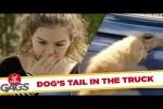 Video - Der Unfall mit dem Hunde-Schwanz