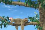 Video - The Owl - 28. The Sloth (das Faultier)