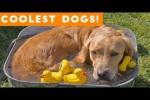 Video - Die lustigsten Hunde 2018