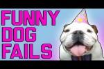 Video - Hoppalas mit Hunden