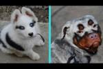 Video - 31 einzigartige Hunde mit besonderen Merkmalen