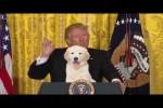 Video - Der Showman Donald Trump