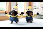 Video - Minion-Dackel-Kostüm