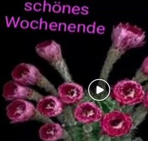 schönes wochenende video download