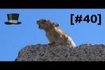 Video - Ein paar richtig lustige Szenen