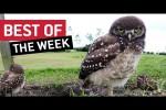 Video - Die besten Videos der 1.Juni-Woche