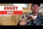 Video - Wenn Tiere sauer sind