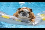 Video - Dogs Who Love Water