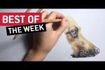 Video - die besten Videos der 2. Januar-Woche