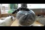 Video - If It Fits, I Sits: The Supercut