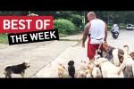 Video - die besten Videos der 1. November-Woche