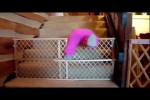 Video - Mission Impossible: Babies Escape