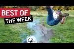 Video - die besten Videos der 3. Juli-Woche