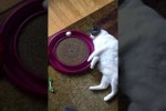 Video - Die faule Katze