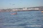 Video - Surfer wird von Wal überrascht