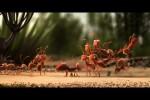 Video - es ist sicherer in Gruppen zu reisen