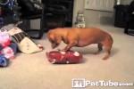 Video - Lustige Momente mit Tieren an Weihnachten
