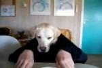 Video - Hund isst am Tisch