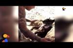 Video - Dieser Hund liebt den Sand
