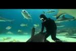 Video - der, der mit den Haien schwimmt