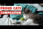 Video - Katzen ohne Ende