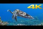 Video - Beautiful Sea in Okinawa