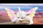Video - Sneakers und Katzen