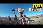 Video - Giraffen sind klasse