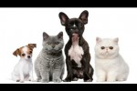 Video - Lustige Szenen mit Tieren
