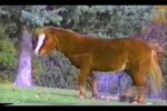 Video - super viele witzige Hoppalas mit Tieren (klasse)