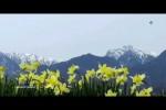 Video - KITARO - A Drop Of Silence