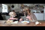 Video - zwei Hunde beim Essen