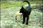 Video - wenn die Katze mit der Eule spielt