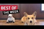 Video - die besten Videos der 2. September-Woche 2019