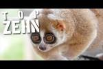 Video - 10 süße Tiere, die dich töten könnten