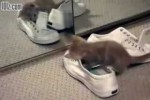 Video - Kitten Mirror and Shoes
