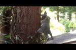 Video - Waschbär-Kind soll klettern lernen