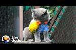 Video - Die Katze und der Papagei