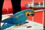 Video - Deutschlands klügste Tiere