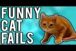 Video - Lustige Katzen-Hoppalas