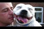 Video - So lieb können Pitbulls sein
