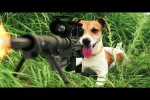 Video - Tiere in Aktion