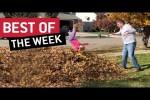 Video - die besten Videos der 2. November-Woche 2018