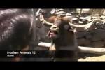 Video - FRANKEN ANIMALS zum Vatertag