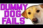 Video - Lustige Missgeschicke von Hunden