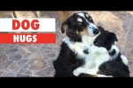 Video - Lustiges mit Hunden