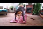 Video - Katze und Hund ärgern ihr Herrchen beim Yoga