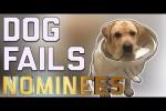 Video - Die top 29 Hunde-Hoppalas